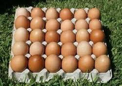 groceries-solitaire-free-range-eggs